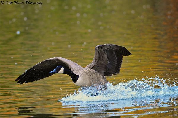 Splash Landing.