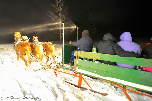 Three draft horses pull a sleigh at the Valentine's in the Forest event held at the Skyline Lodge in Highland Forest, Fabius, New York.