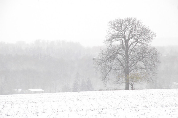 Tree in a field of white snow.