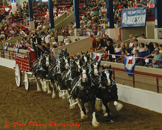 This years New York State Fair champion of the 8 Horse Hitch was the Grandview Clydesdales from Huntington, Indiana.