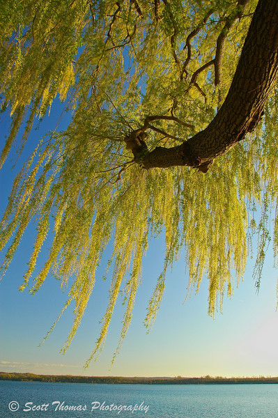 Branches of a Weeping Willow reach out over Onondaga Lake near Syracuse, New York. The shade of willow trees have protected many a reader like this author from the hot summer Sun.