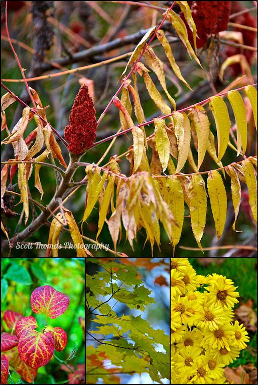Autumn colors found around the Village of Baldwinsville, New York.