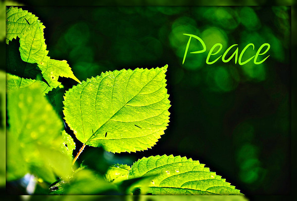 A green leaf of peace.