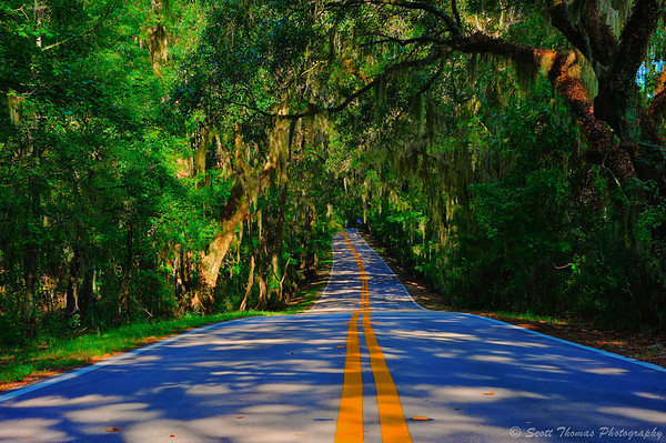 Miller Landing Road near Tallahassee, Florida is designated a Canopy Road as the trees and moss meet overhead from both sides of the road.