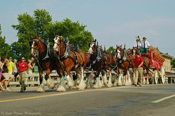 Budweiser Clydesdales Hitch going over the barge canal bridge in  Baldwinsville, New York.