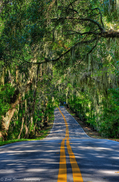 A stretch of Canopy Road near Tallahassee, Florida.