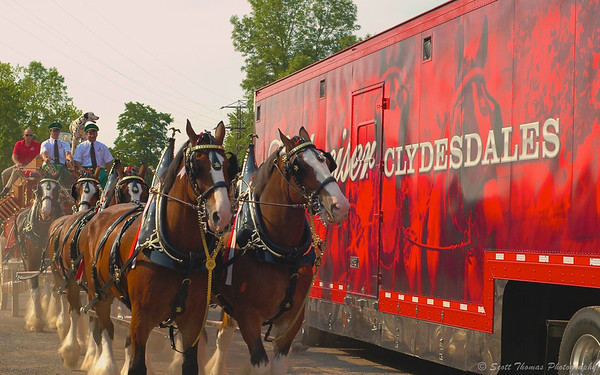 The famous Budweiser Clydesdale Hitch passing by their hauler as the start their visit in Baldwinsville, New York.