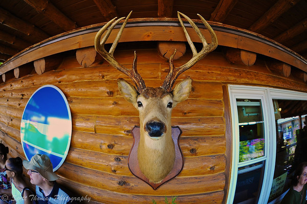 Deer trophy hanging on the outside wall of the DEC Log Cabin at the Great New York State Fair in Syracuse, New York.