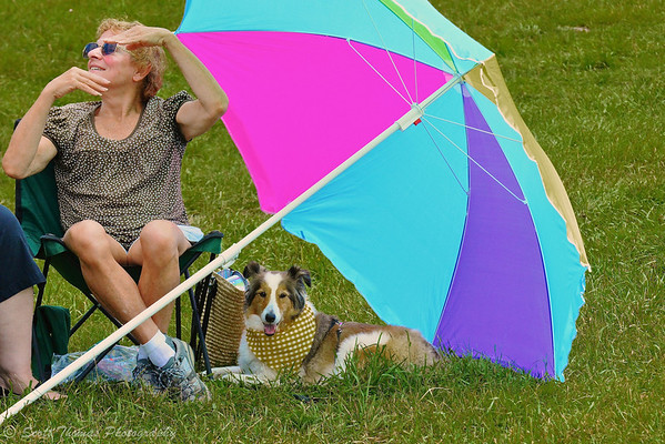 A Shetland Sheepdog or Sheltie staying cool under her owner's colorful umbrella at the Eighth annual Sheep Dog Trials in Virgil, New York.