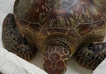 Turtle Watch Rehabilitation Centre