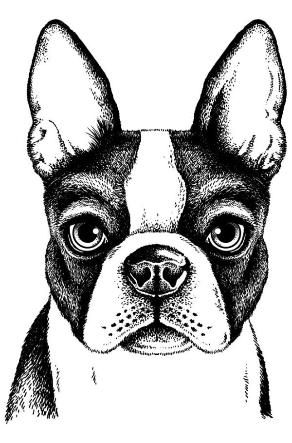Placa Decorativa Dog