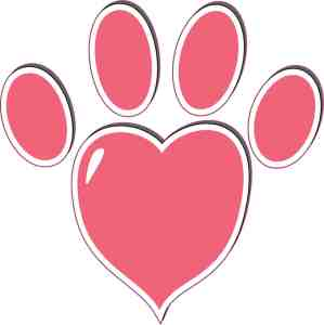Rose Pink Heart Paw Print Bumper Sticker