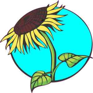 Teal Sunflower Sticker