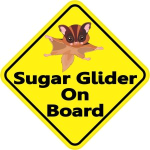 Sugar Glider On Board Magnet