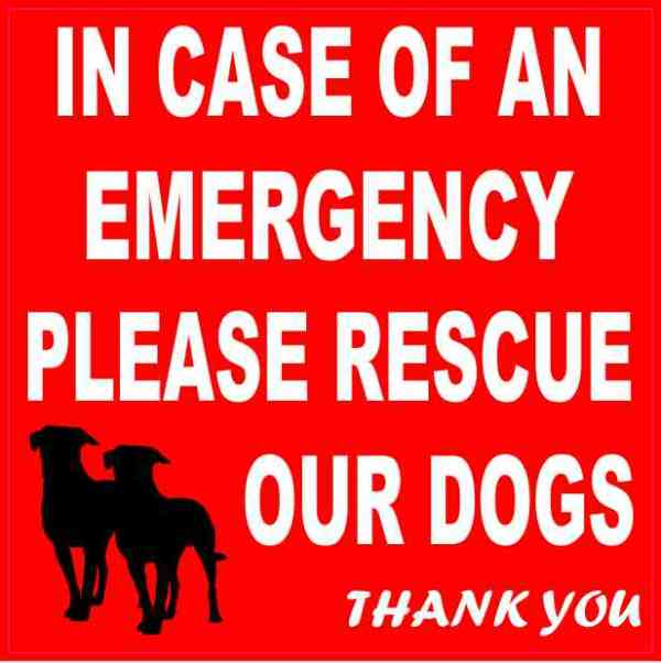 Please Rescue Our Dogs Magnet