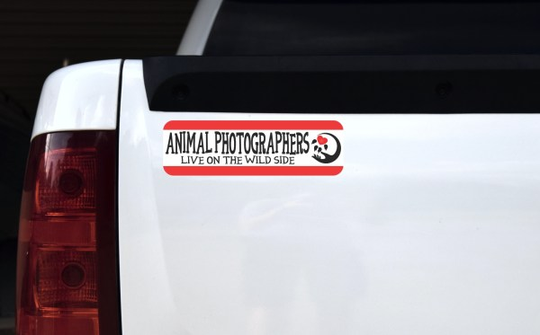 Animal Photographers Magnet