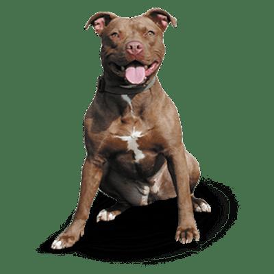 5847f61acef1014c0b5e48a3 Pitbull Attacks Dog