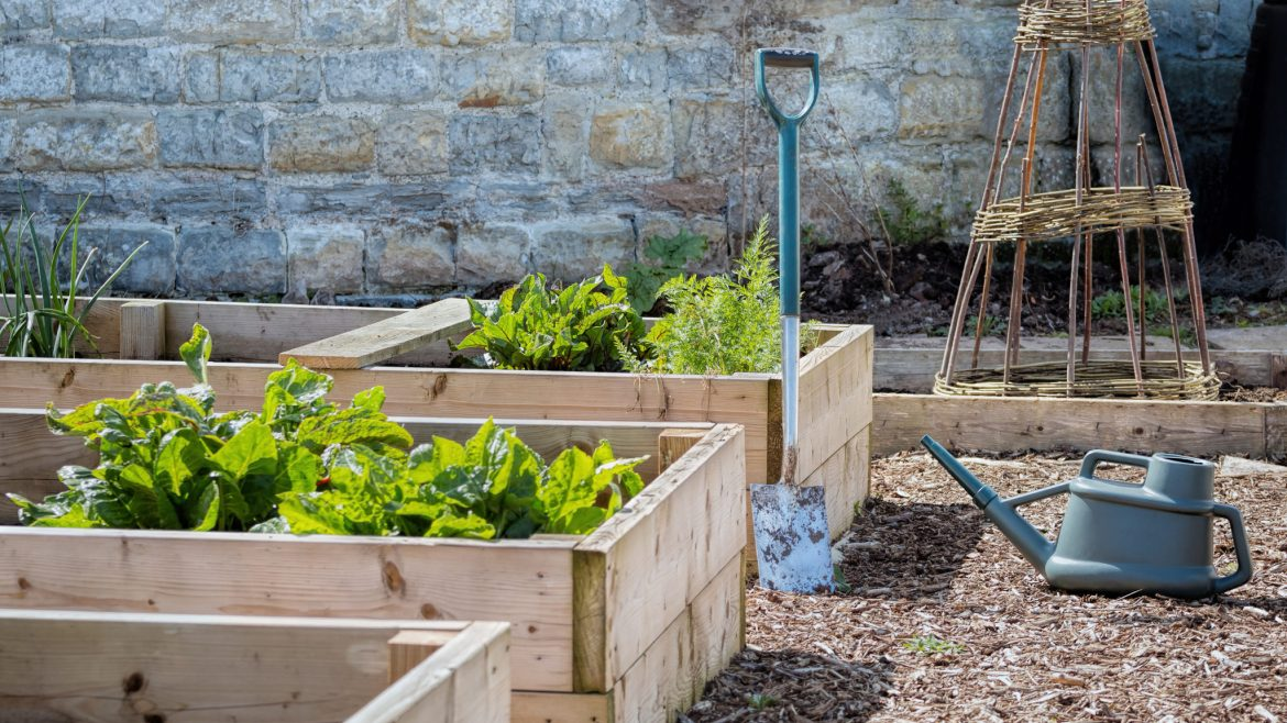 Raised flower and vegetable beds made from timber.