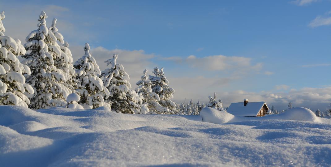 Jak dbać o iglaki zimą? Zimowa pielęgnacja zimozielonych roślin ozdobnych