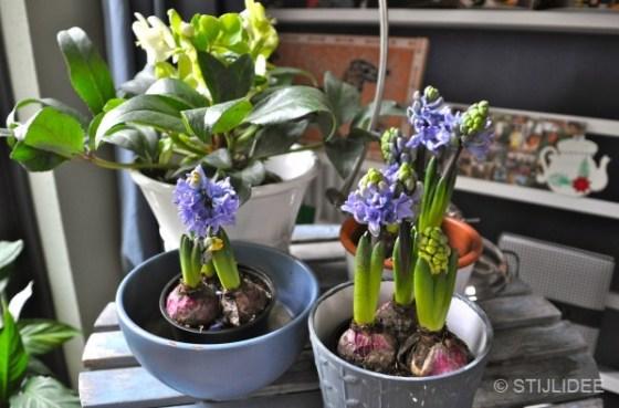 styling bloemen woonkamer Vleuten na STIJLIDEE interieuradvies