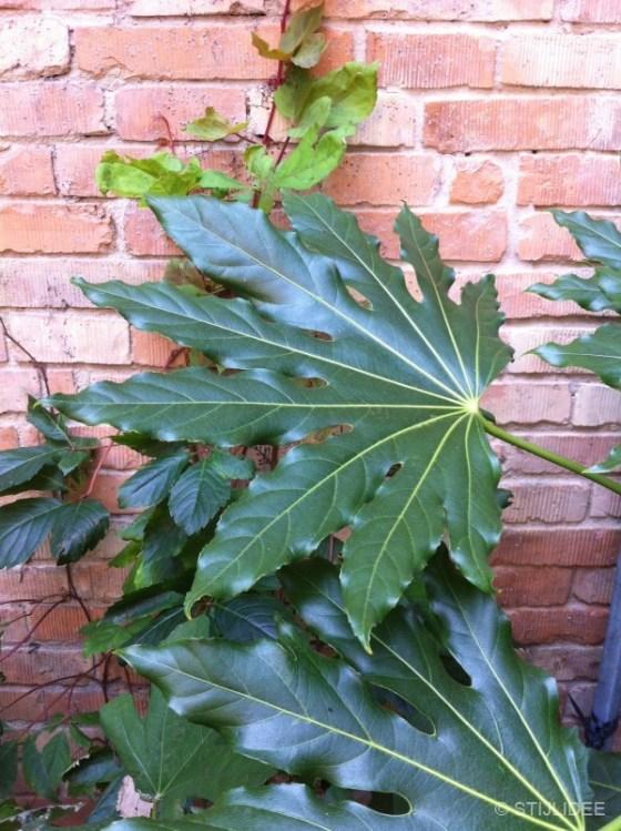 Groen blad in Ravenna | Fotografie STIJLIDEE Interieuradvies en Styling