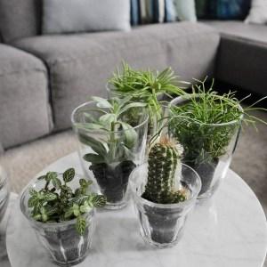 Urban Jungle Bloggers | Hoe je groene planten met helder glas kunt combineren | STIJLIDEE Interieuradvies en Styling