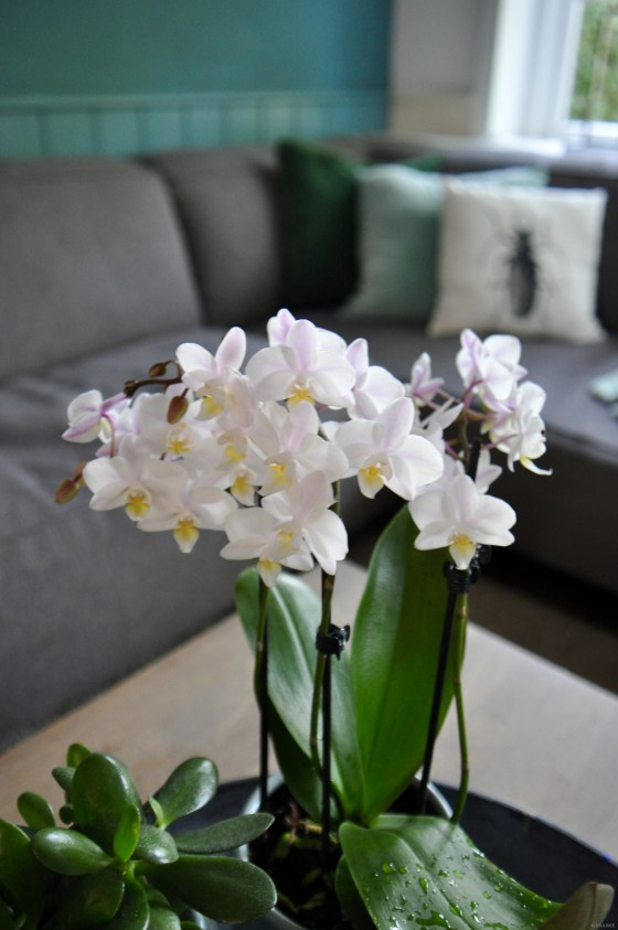 Urban Jungle Bloggers | 1 Orchidee Plant - 3 Stylings | Styling en Fotografie: STIJLIDEE Interieuradvies en Styling