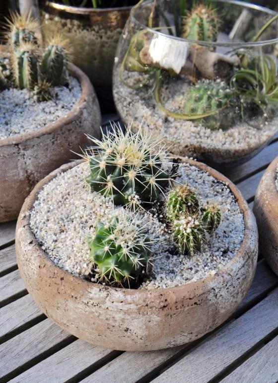 Urban Jungle Bloggers   Plant Still Life - Desert   STIJLIDEE Interieuradvies en Styling