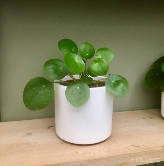 De nieuwste trends in planten en groen styling | Fotografie: STIJLIDEE Interieuradvies en Styling