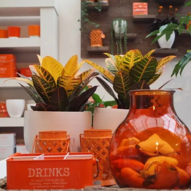Feest styling   Oranje   Stijlvolle ideeën voor jouw oranje feest #koningsdag #wk #ek #interieur #wonen #inrichten #oranje #styling #feest #woonblog -www.stijlvolstyling.com