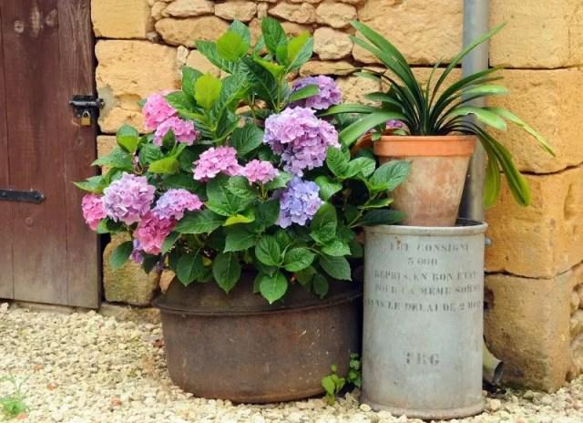 Buitenleven | Hortensia #tuin #inrichten #balkon #terras - www.stijlvolstyling.com