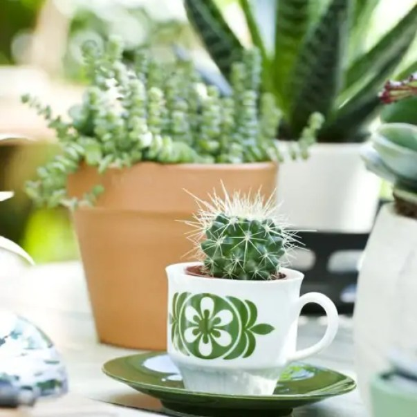 4 zomerse plantenideeën - Groen wonen & DIY   Zomerse ideeën met vet planten & cactussen + DIY mini tuintje maken