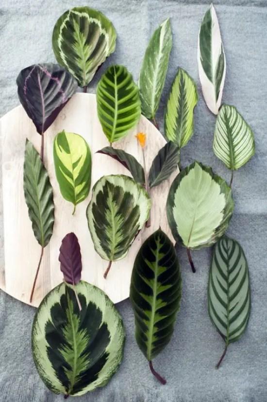 Interieur | Calathea = Woonplant van de Maand september - www.stijlvolstyling.com
