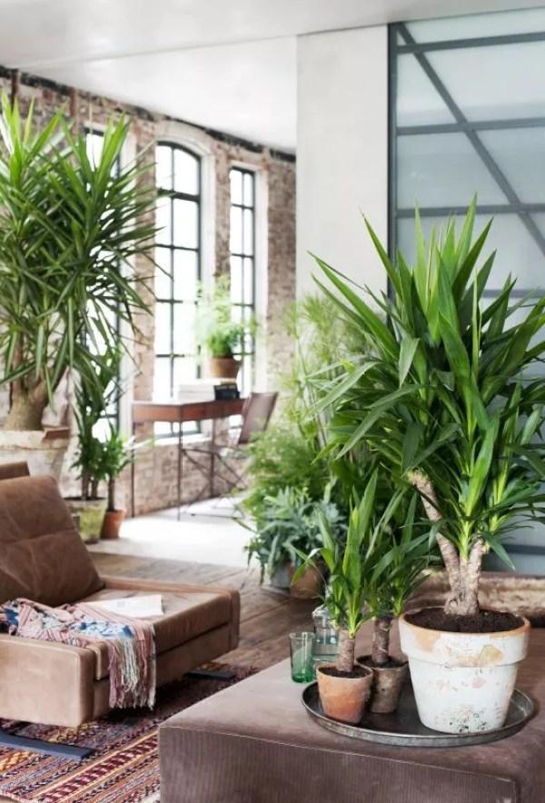 Yukka - Woonplant van de maand - Stijlvol Styling Woonblog