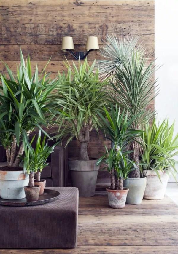Yucca is woonplant van de maand - Stijlvol Styling Woonblog