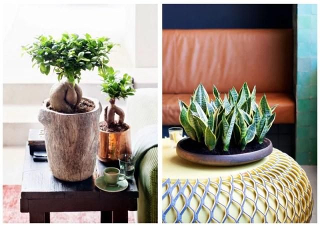 Groen wonen | Eco luxe - planten & bloemen trend 2015 nr.2 - #woonblog #interieurblog www.stijlvolstyling.com