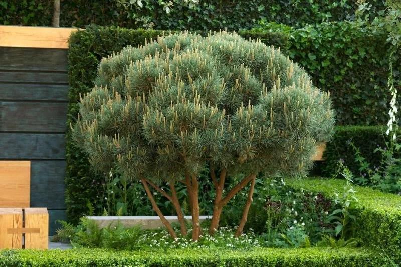 Naaldbomen in de tuin - tuintrends 2015 - Stijlvol Styling Woonblog www.stijlvolstyling.com