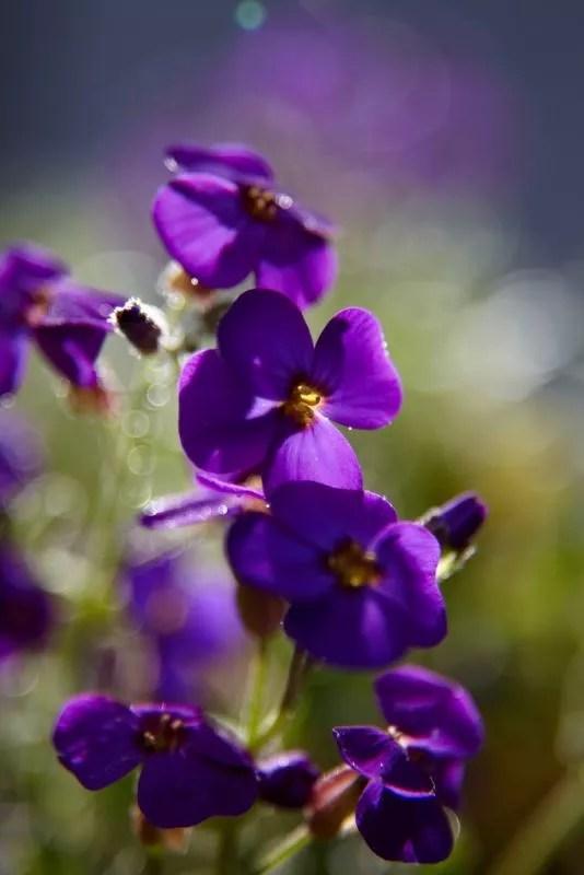 - muurbloem is tuinplant van de maand - Stijlvol Styling woonblog www.stijlvolstyling.com