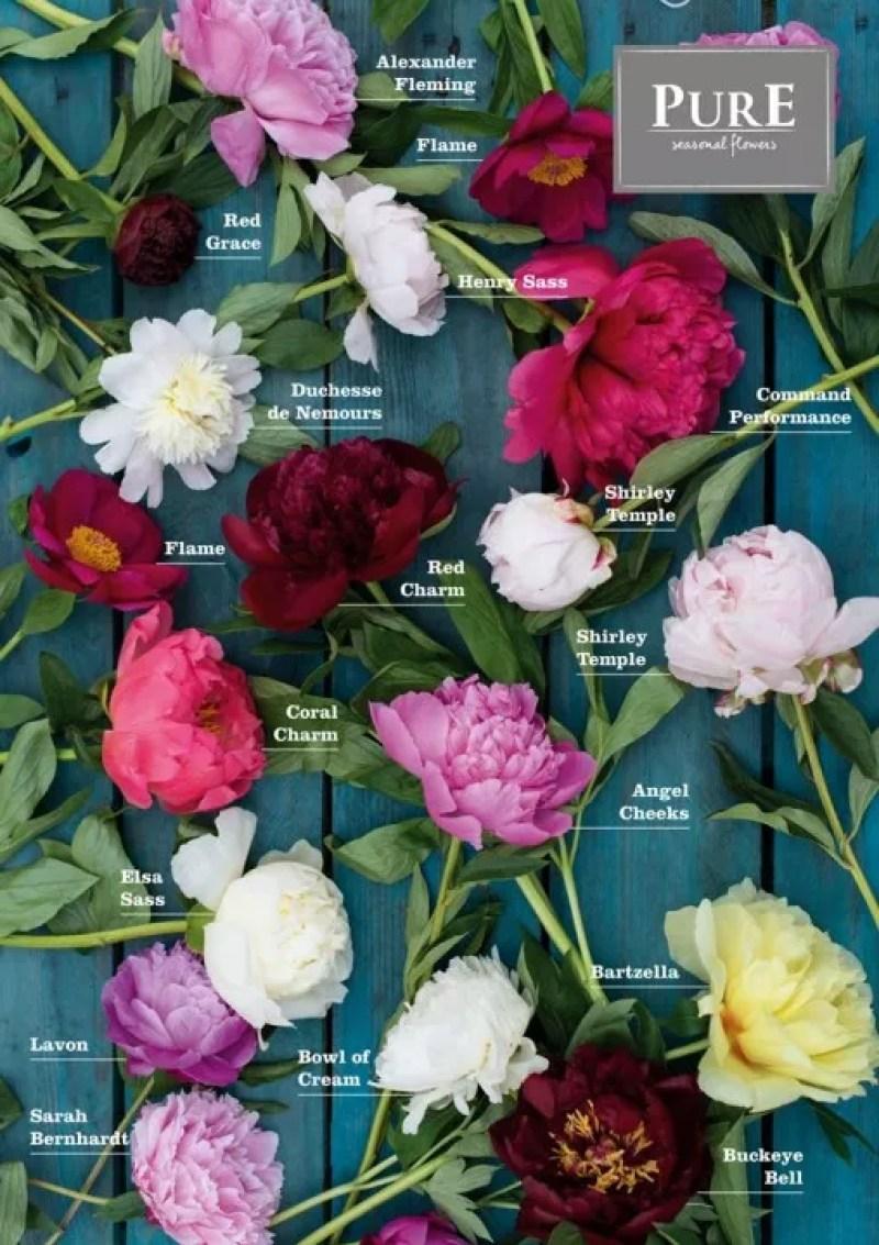 Pioen roos - zomer bloem - Stijlvol Styling woonblog www.stijlvolstyling.com