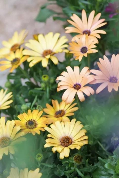 Tuin inspiratie   15 zomer tuinplanten toppers  u2022 Stijlvol Styling   Woonblog