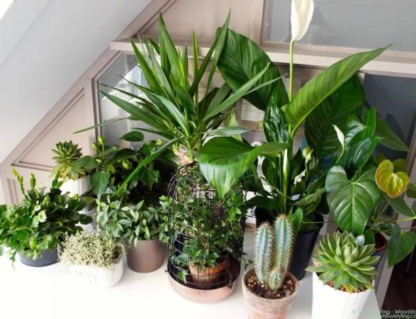 Groen wonen | 'Show your plant gang' voor Urban Jungle bloggers - Stijlvol Styling Woonblog - www.stijlvolstyling.com