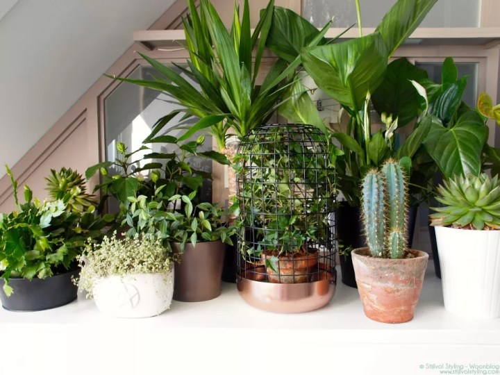 Groen wonen | 'Show your plant gang' voor Urban Jungle bloggers - Stijlvol Styling Woonblog - www.stijlvolstyling.com #urbanjunglebloggers #plantgang