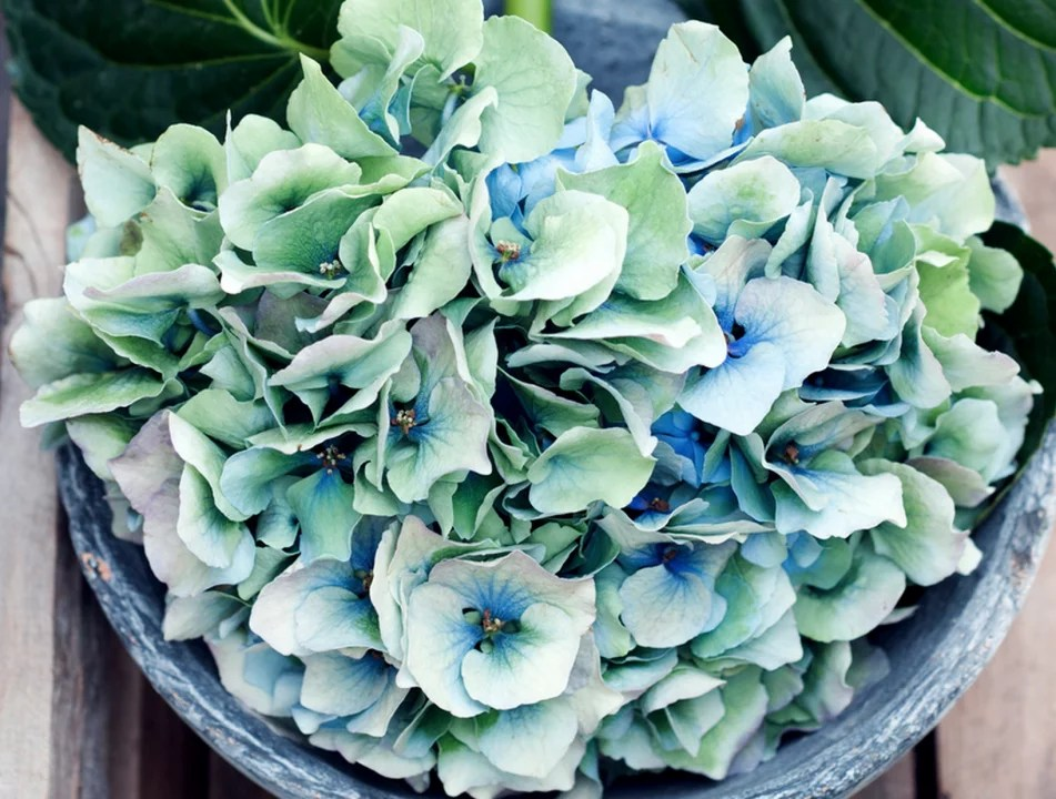 Interieur inspiratie   Gek op Hortensia's - Stijlvol Styling woonblog www.stijlvolstyling.com