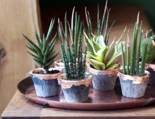 Groen wonen & DIY | Vrouwentong met glamourtintje - Stijlvol Styling woonblog www.stijlvolstyling.com