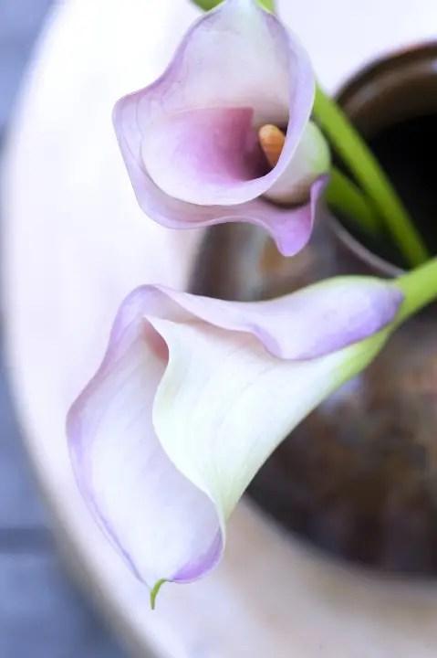 Groen wonen | Calla op de Bloemenagenda - Stijlvol Styling woonblog www.stijlvolstyling.com