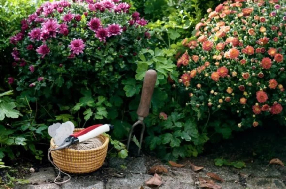Buitenleven   7 handige onderhoud tips voor jouw najaarstuin - #woonblog StijlvolStyling.com