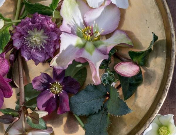 Buitenleven | Kerstroos = Tuinplant vd Maand december - Woonblog StijlvolStyling.com