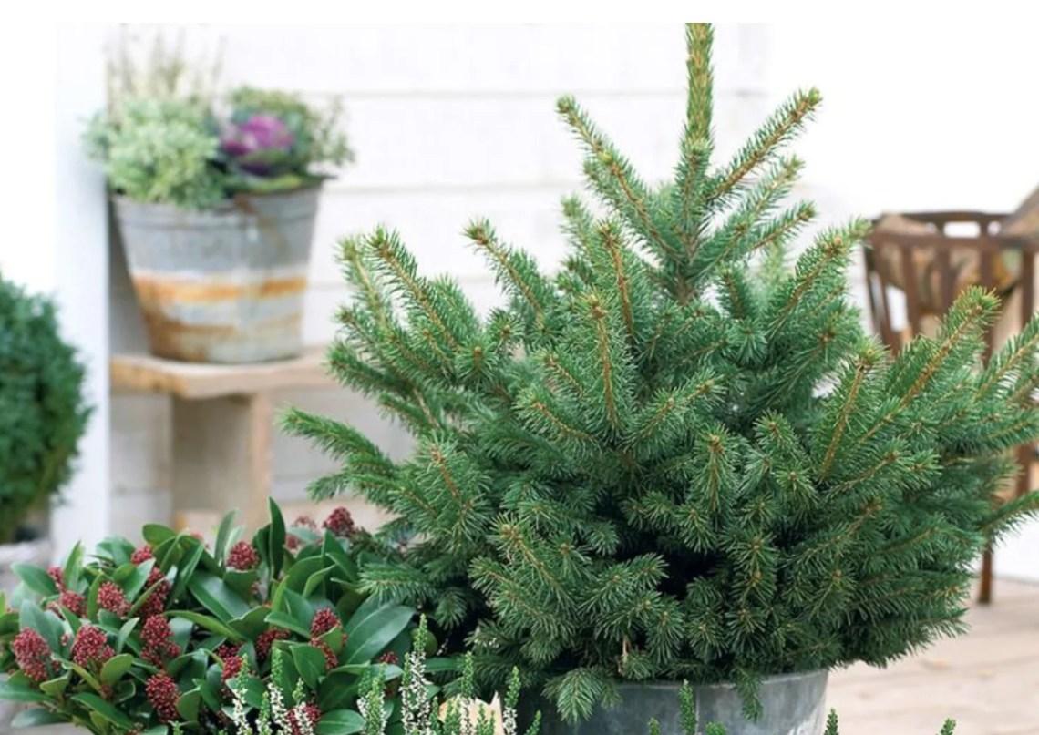 Buitenleven | Feestdag decoratie op jouw balkon of terras - Woonblog StijlvolStyling.com