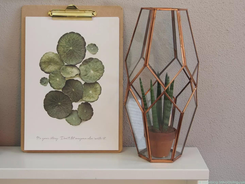Lucht Bevochtigen Slaapkamer : Groen wonen de meest geschikte planten voor de slaapkamer