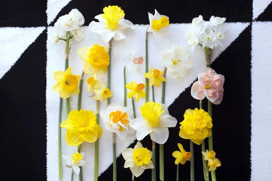 Groen wonen   De Narcis brengt het voorjaar in huis - Woonblog StijlvolStyling.com (Daffodil plant & flowers)